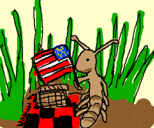American ant picnic in the grass