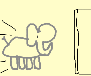 Elephant charges into Wall