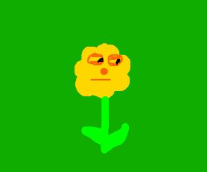 Suspiciously pretty flower