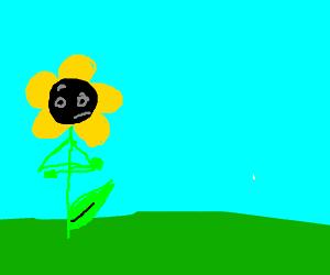 sunflower isn't impressed whatsoever
