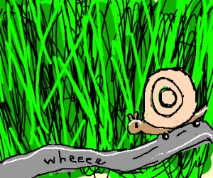 Skater Snail