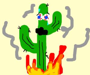 Cactus fire