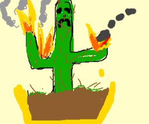 sad cactus is on fire