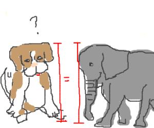 Puppy Sized Elephants