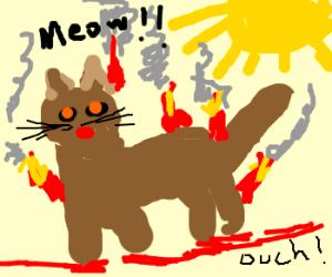 Cat burned, before Sun hits it.. ;D