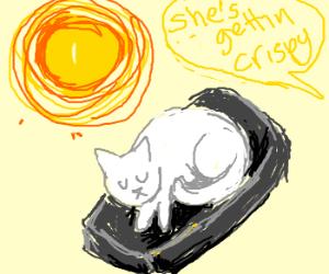 Sun bakes white cat.