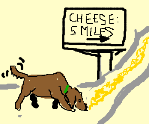 dog sniffs out cheese 5 miles away