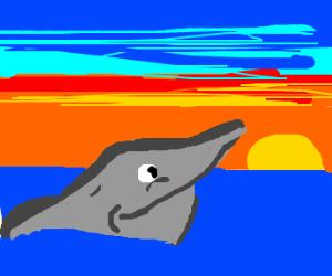 dolphin enjoying the sunset