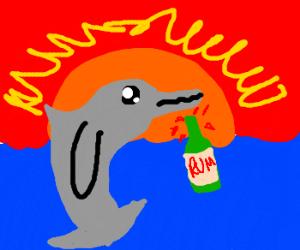 sunset a drunken dolphin