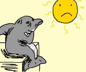 Wrinkled Dolphin Ponders Life + :( Sun