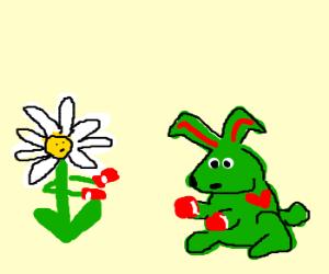 daisy vs. green love bunny