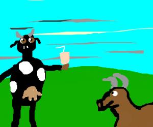 Cows milkshake brings bulls to the yard
