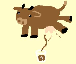Chocolate cow moos