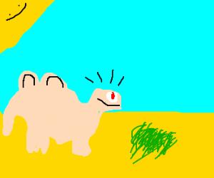Camel finds black grass.