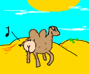 one-eyed butt-camel sees some grass