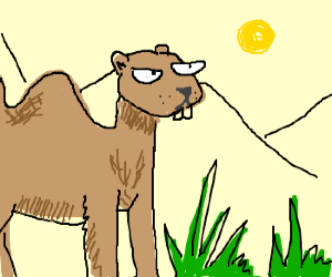 giant gopher-camel looks askance