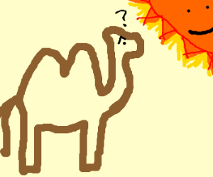 Camel gives Sun questioning glance