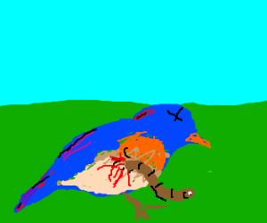 Dead Blue Bird with worm chestburster..