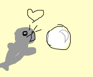 Seals worship mirrorball