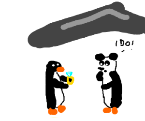 penguin proposes marriage to panguin
