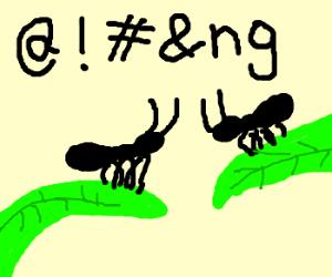 2 bugs *@!#&ng