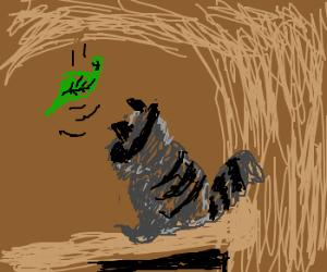A leaf falls, a raccoon watches