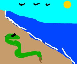 snake has a break from work