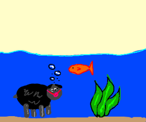 Black sheep underwater with ball gag