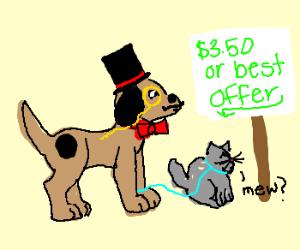 Dapper Dog sales kitten for $3.50
