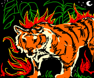 tiger tiger burning bright...