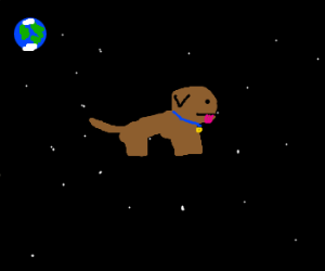 Dog flying in space.