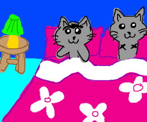 Monobrow cat and armless cat in bed