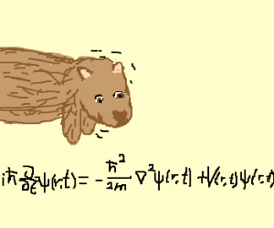 Wombat approves of equation