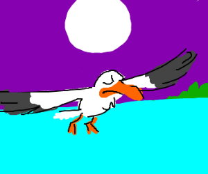 a smug seagull flies in the night sky