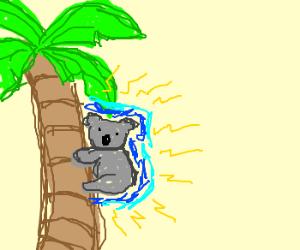 Electric Koala