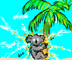 Electrified Koala climbs palm tree