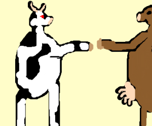 cows fist bumping