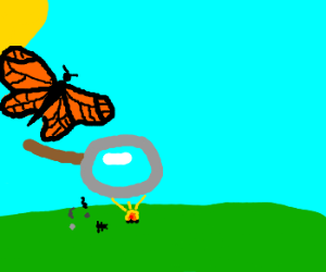 Butterfly kills ants w/ magnifying glass