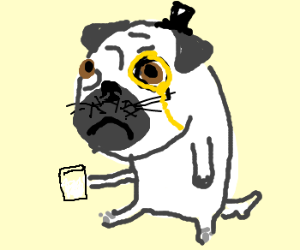 A gentleman pug drinking milk