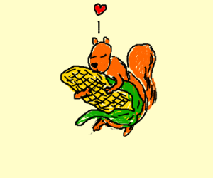 Squirrel loves corn