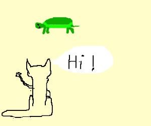 Cat greets tutle.