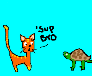 Cat and Turtle hang out