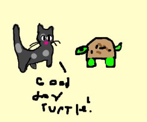 cat greets turtle