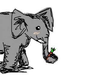 Elephant eating tiny carrot
