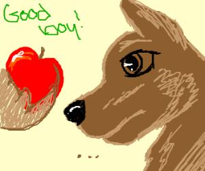 a dog receives an apple as a reward