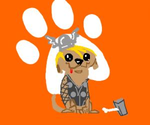 dog wearing thor costume