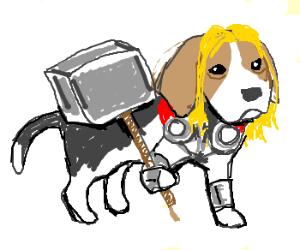 Thor the Beagle