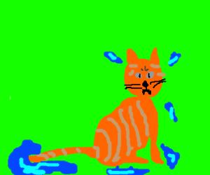 Wet cat is not happy.