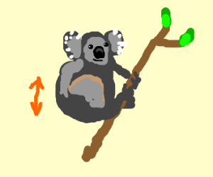 A koala frotting against a twig