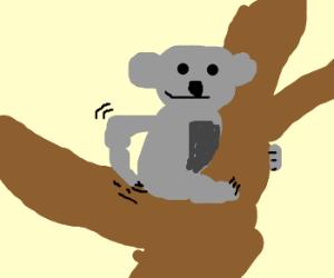 koala scratched its butt